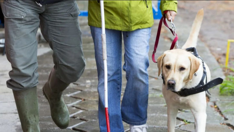 Image showing 2 people walking on street, one with a guide dog
