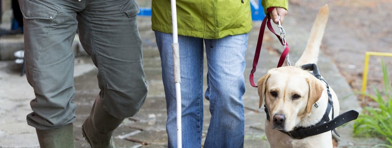 Images shows the legs of a couple walking with guide dog